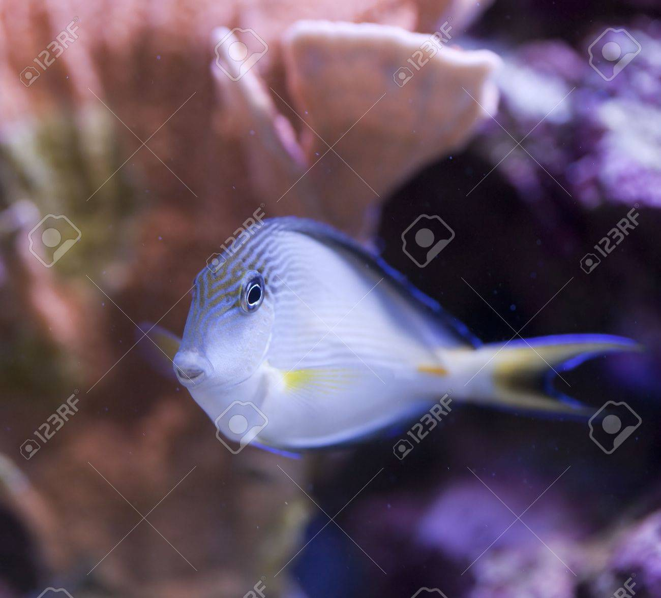 tropical animal in a salt water fish tank aquarium under water. Flash light can kill the animals so the photo was taken with available lights and reflectors Stock Photo - 5424725