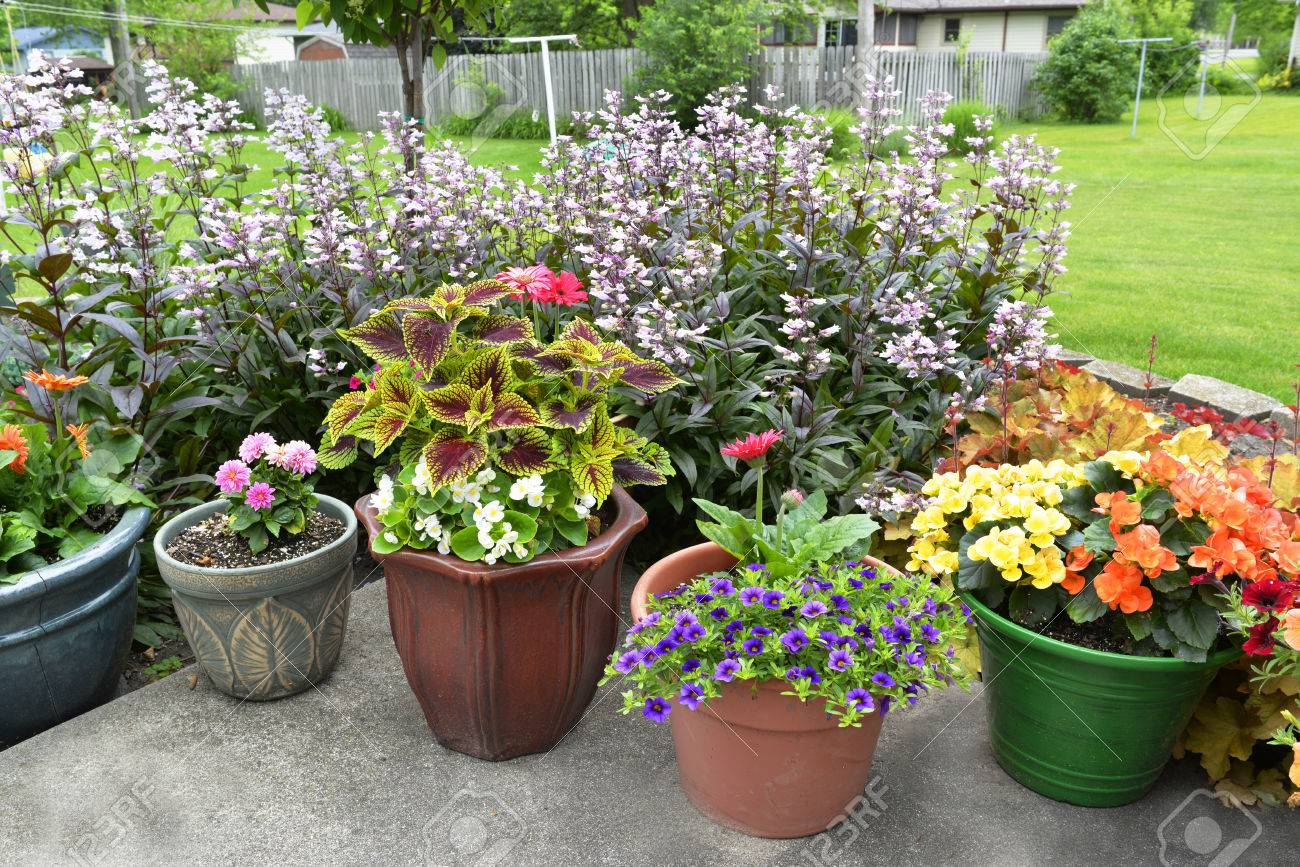 A backyard patio is full of various sizes and shapes of pots