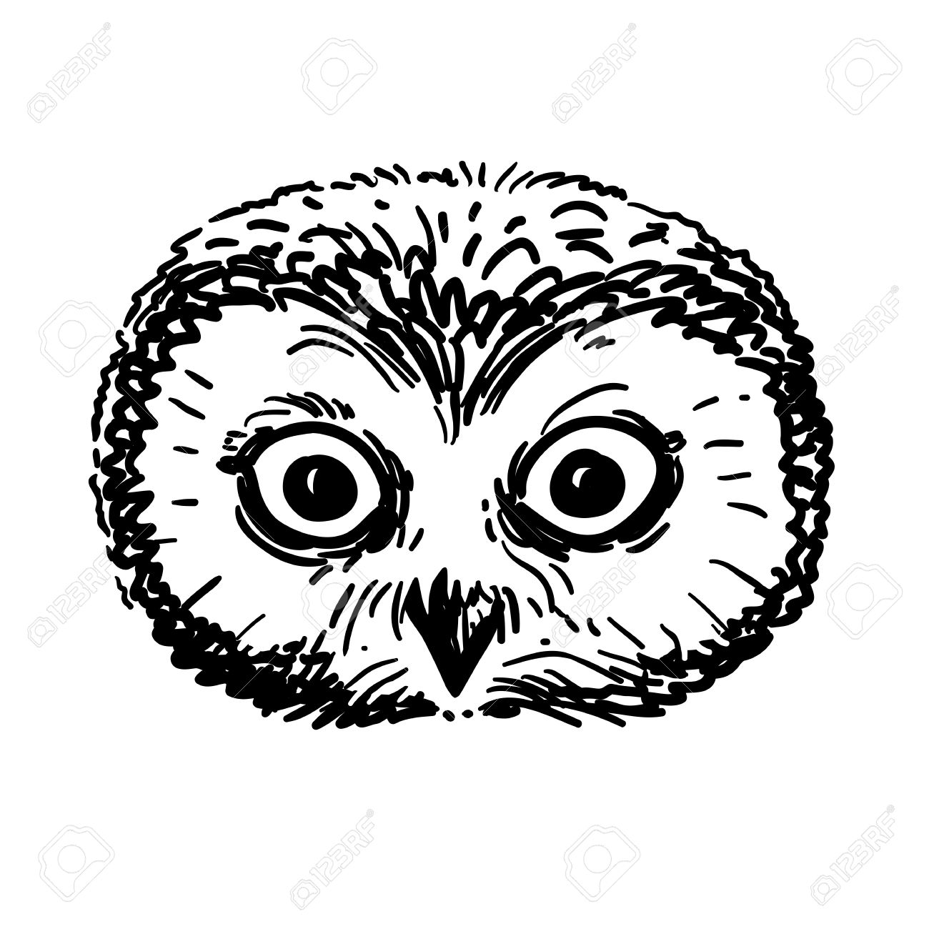 Vector Hand Drawn Black And White Illustration Of An Owl Portrait