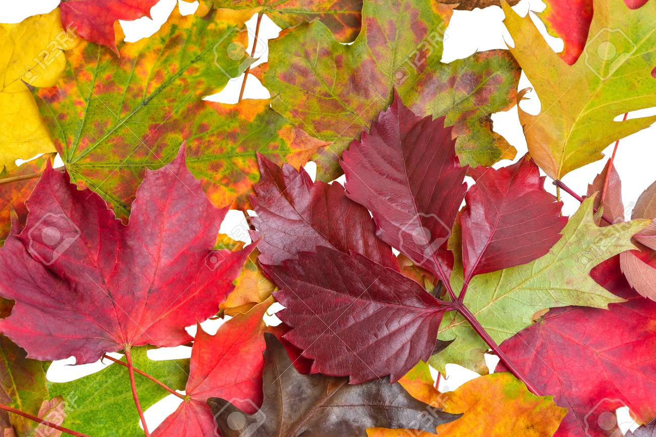 Autumn Leaves on White - clipping path - 113575276