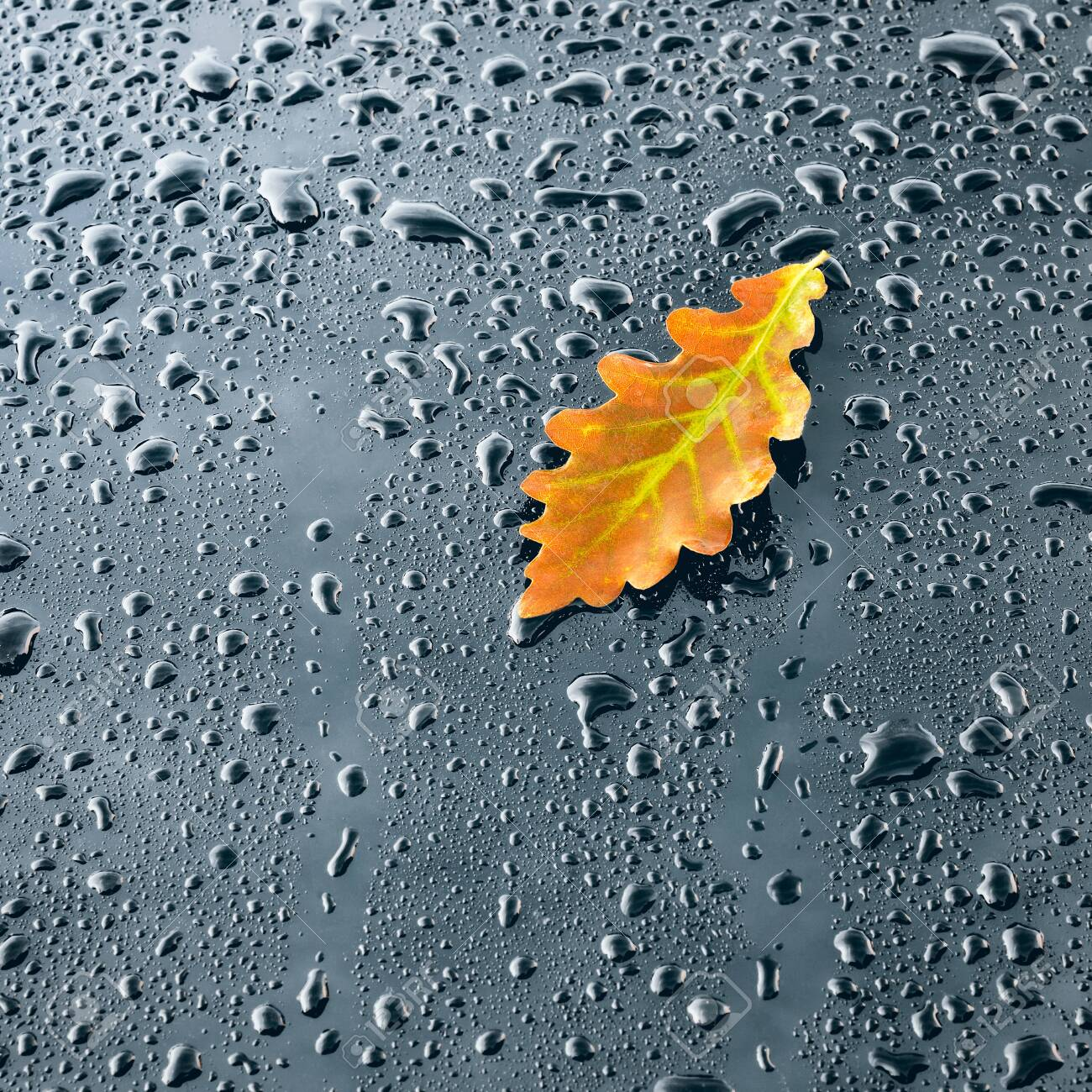 Water Drops on Polished Car paint with Leaf - 113575277