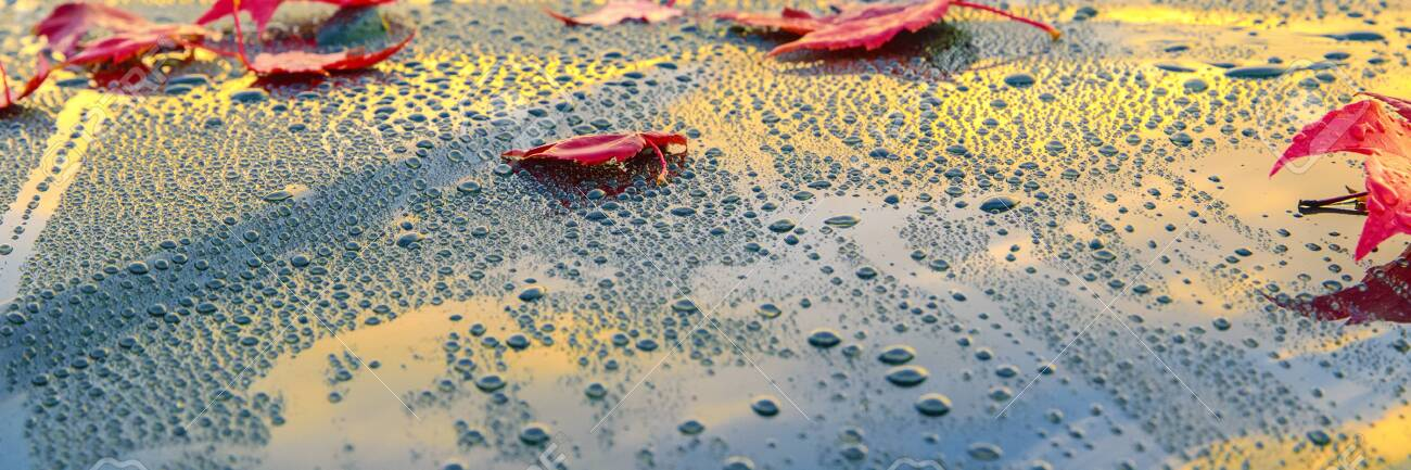 Beautiful autumn leaves lying on the bonnet of a clean, wet car - shallow depth of field - 130118846