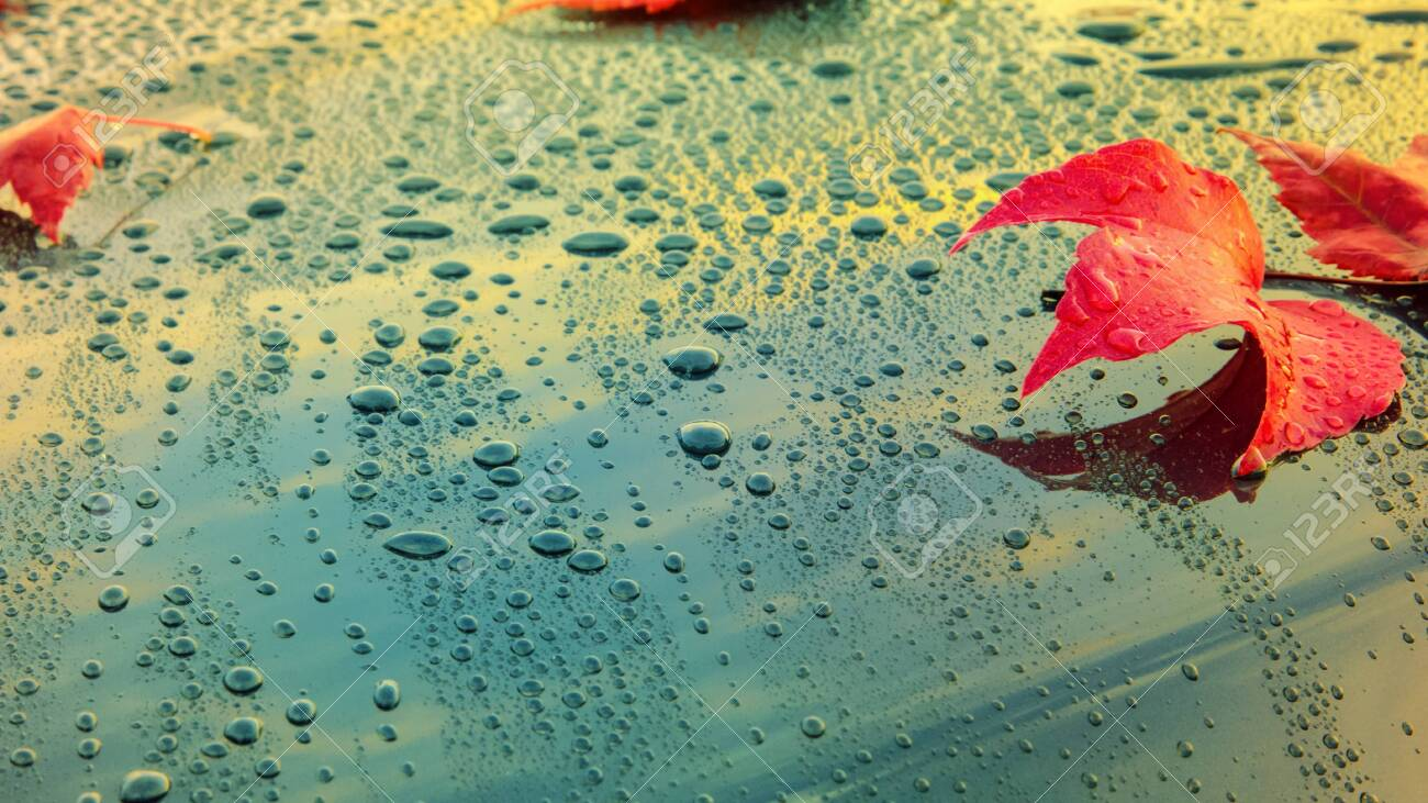 Beautiful autumn leaves lying on the bonnet of a clean, wet car - shallow depth of field - 130118850