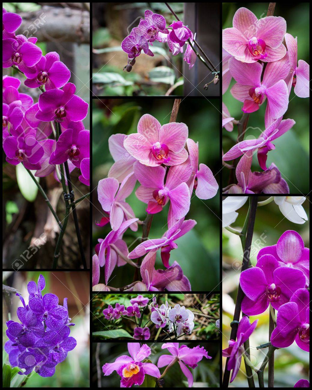 Types Of Purple Orchids