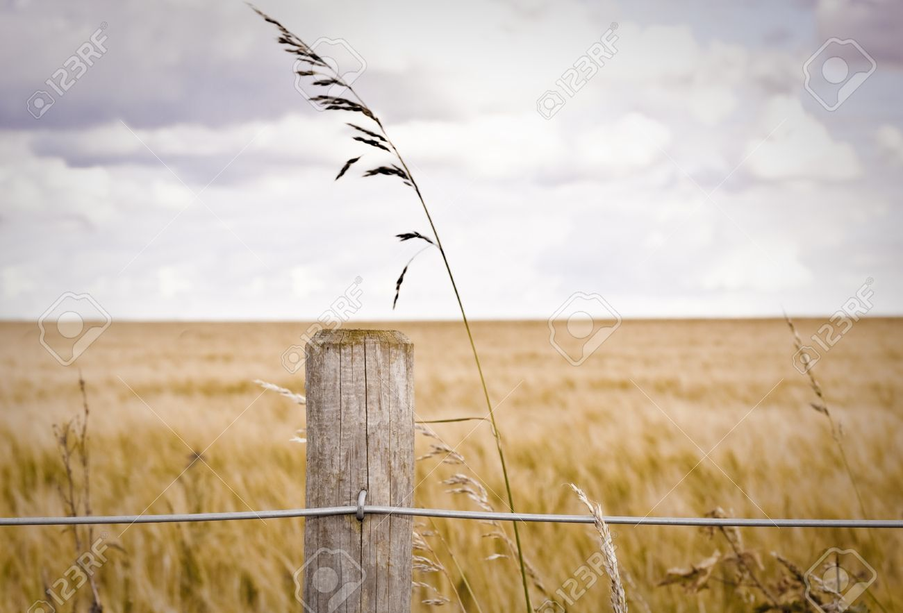 Fence Post In Front Of A Barley Field Stock Photo, Picture And ...