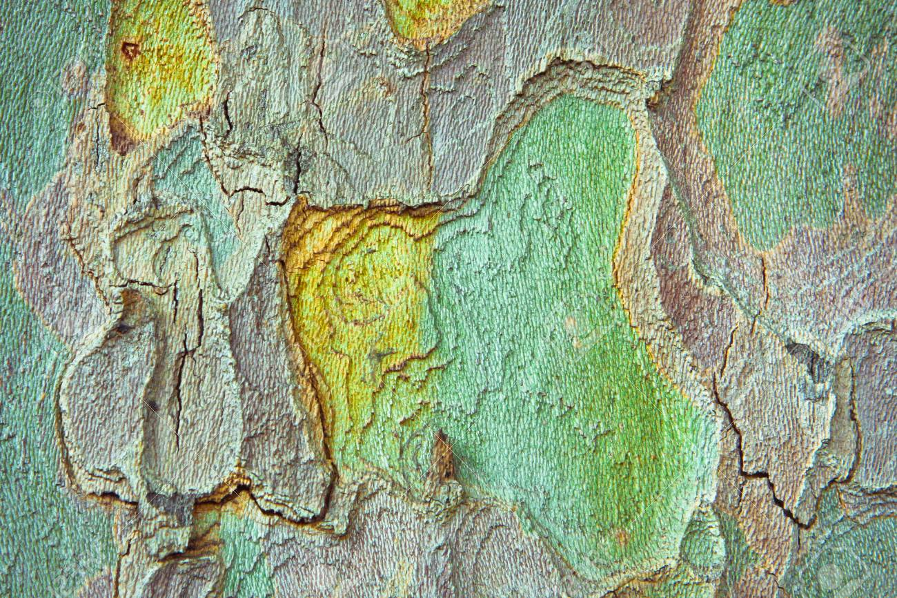 Colorful Tree Bark As A Detailed Background Image Stock Photo ...