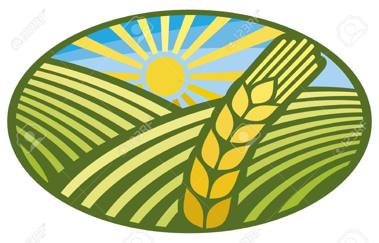 wheat sign (wheat badge, design) Stock Vector - 14836386