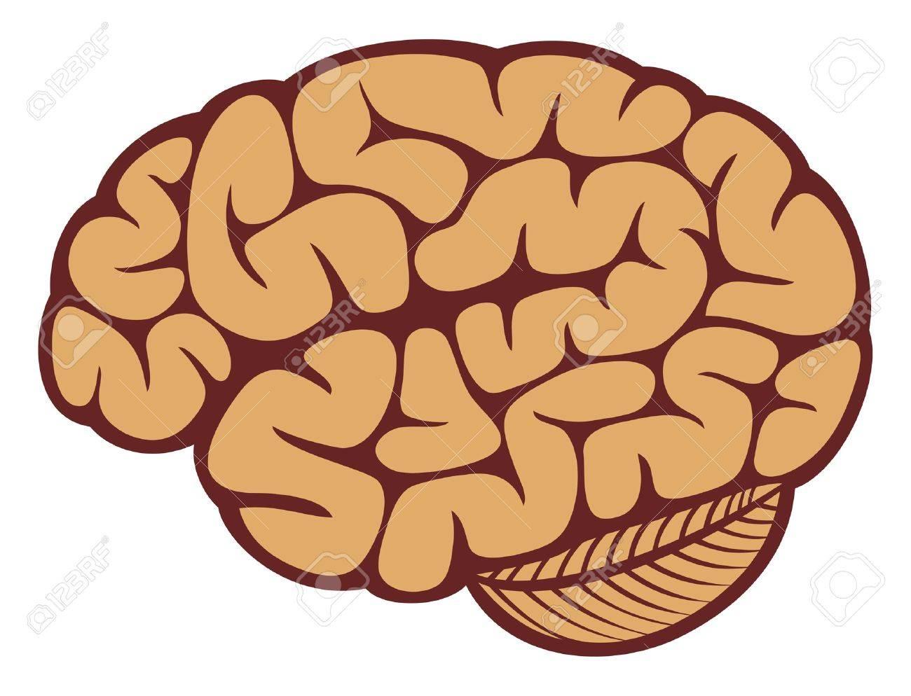 The human brain Stock Vector - 14836395