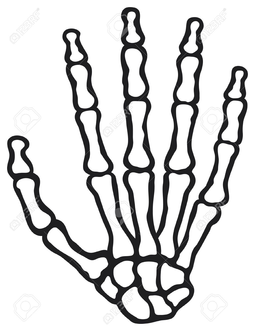 Human Skeleton Hand Vector Human Hand Bones Royalty Free Cliparts ...