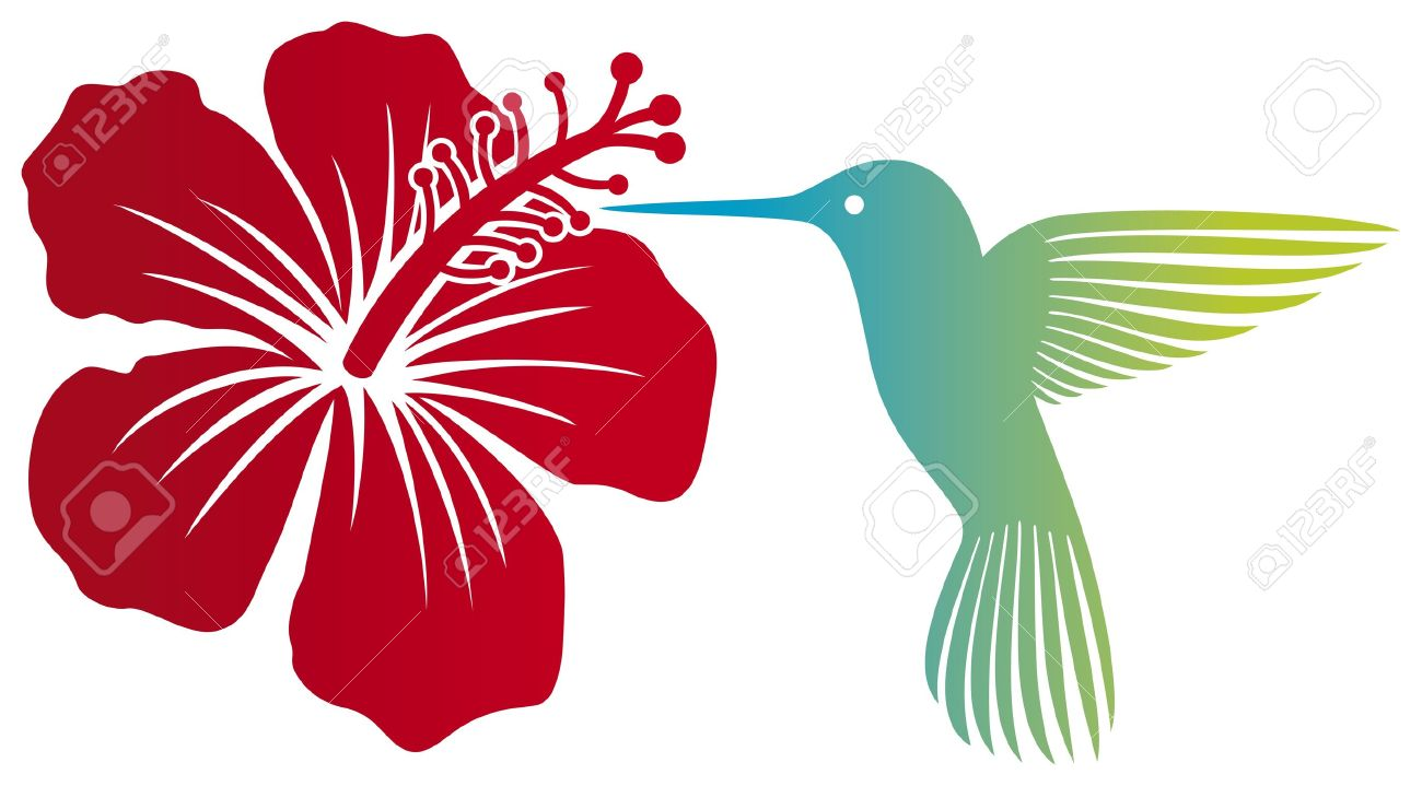 hummingbird and red hibiscus flower  colibri and flower Stock Vector - 18661706