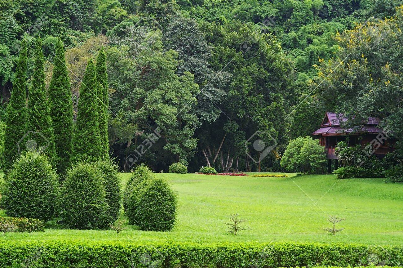 Captivating Grass Garden With Pine Tree On The Green Tropical Forest Back Ground Stock  Photo   21423552