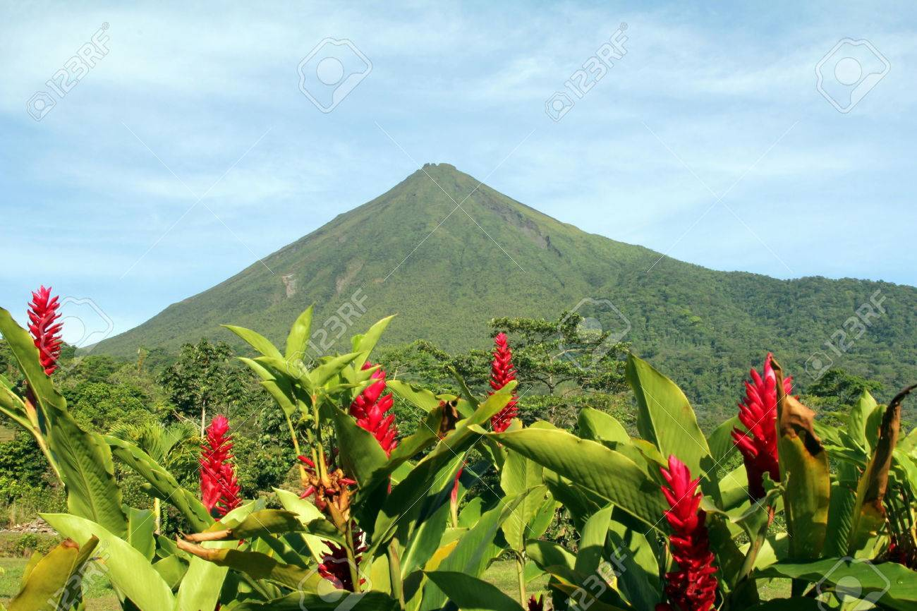 Arenal Volcano In Costa Rica With Red Flowers Stock Photo