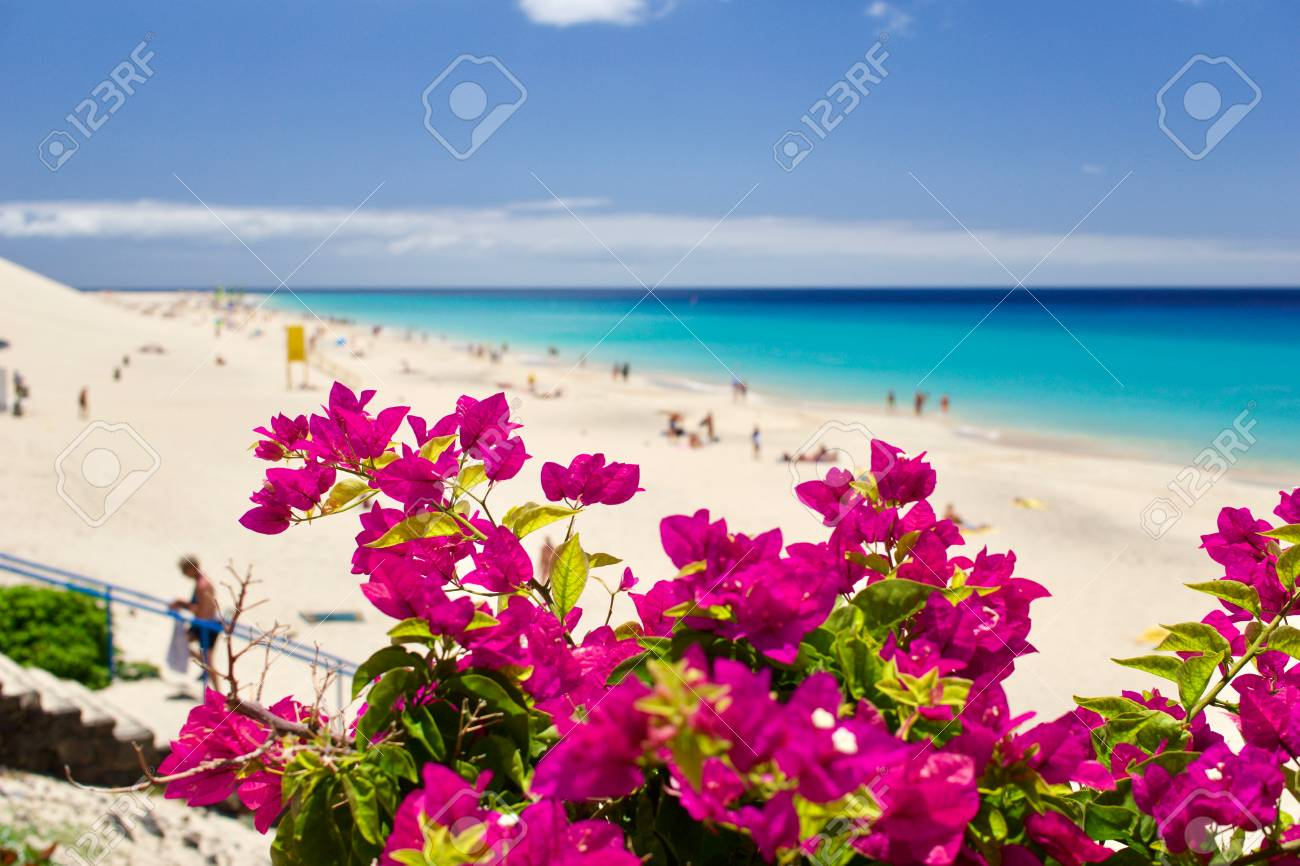 People sunbathing and relaxing at the beach in Morro Jable, Fuerteventura - 79877341
