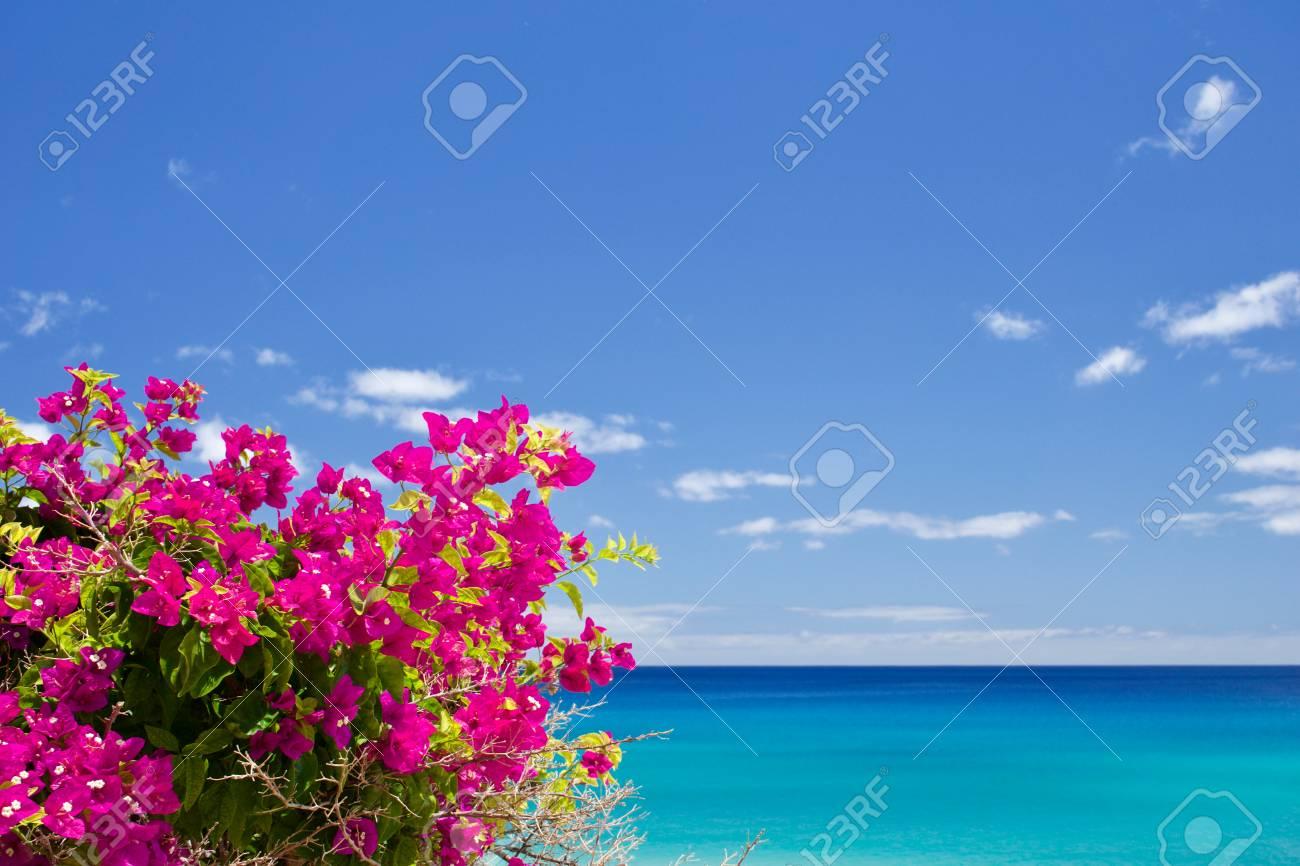 Bougainvillea in front of the sea - 79906742