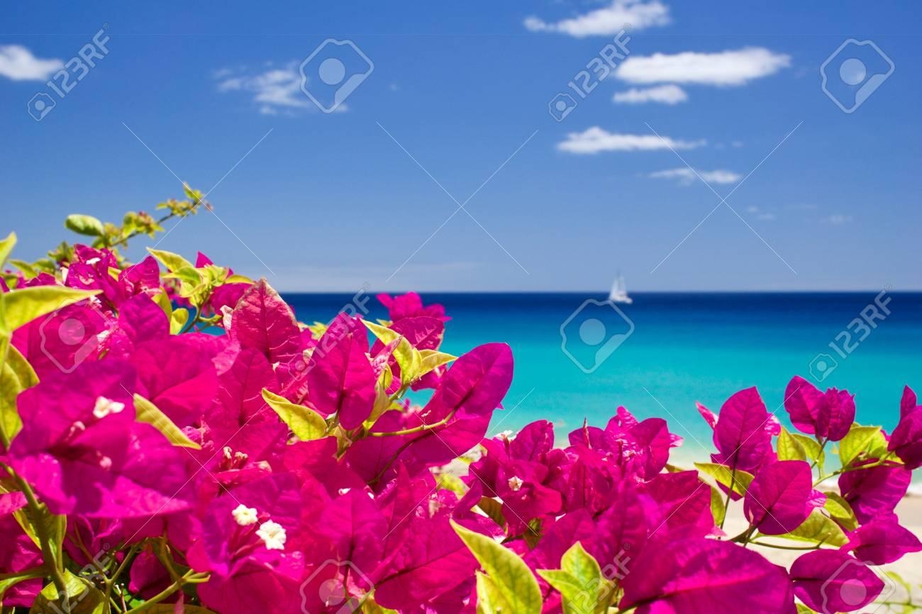Sailing at the coast of Fuerteventura - 81836380