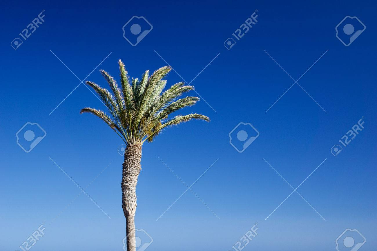 Isolated date palm tree against blue sky with copyspace for text for example as background for a postcard - 83727121