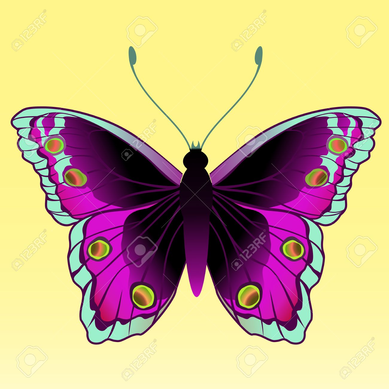 multi colored butterfly stock photos royalty free multi colored
