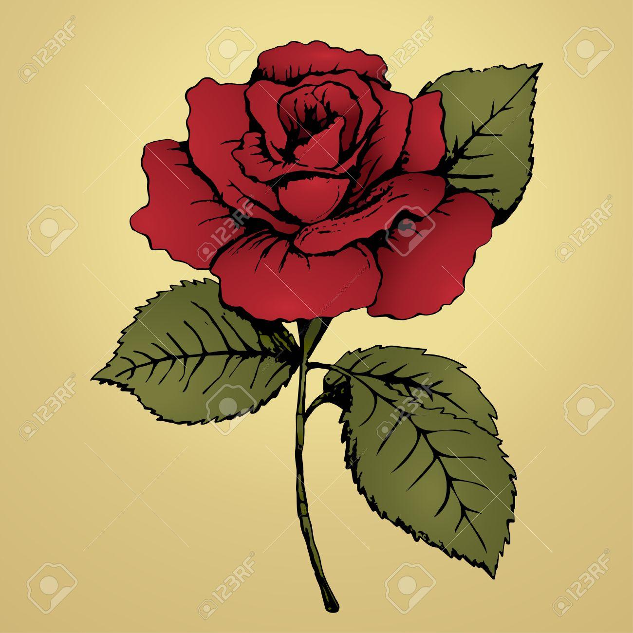 Flor Color De Rosa Roja Dibujo A Mano Bud Pétalos Rojos Hojas