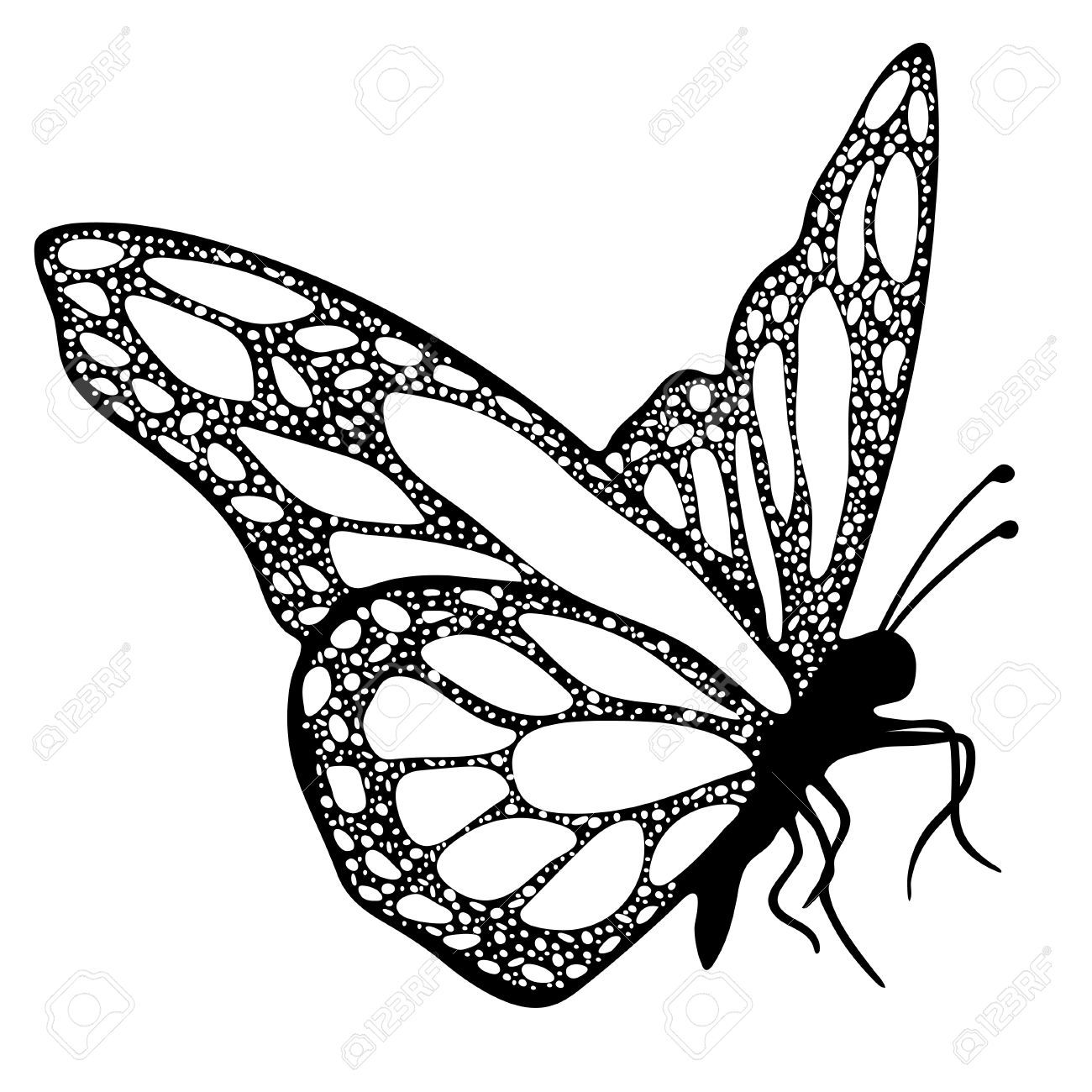 Vector Illustration Butterfly Monochrome Coloring Book Black And White Hand Drawing