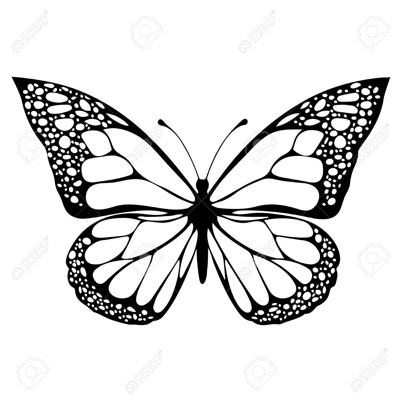 蝶モノクロ塗り絵黒と白のイラスト手描きタトゥー スケッチ