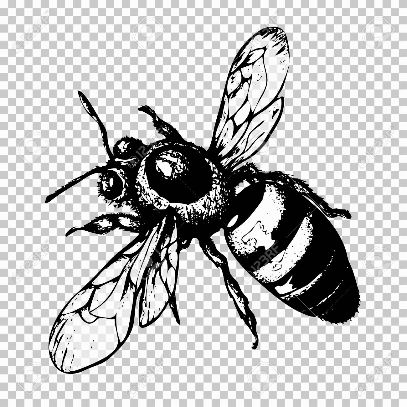 Bee hand drawing black sketch insect on a transparent background vector illustration stock