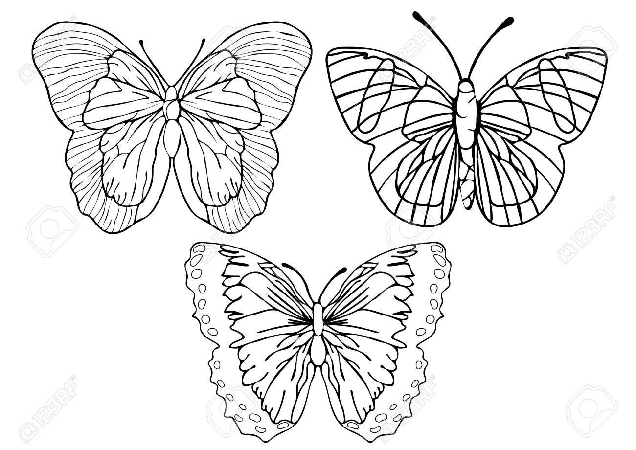 Butterflies outline set coloring linear drawing silhouette sketch contour vector black