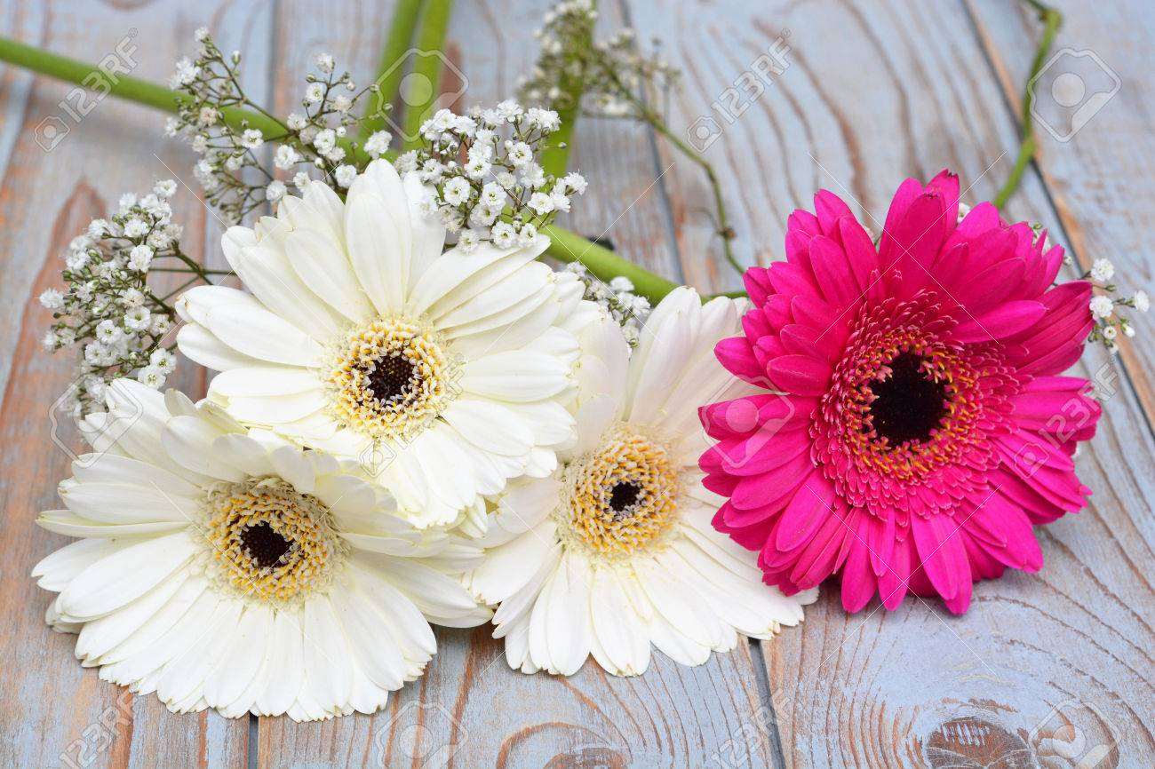 White Gerber Daisies With Pink Gerber On Old Wood Stock Photo, Picture And  Royalty Free Image. Image 34754372.