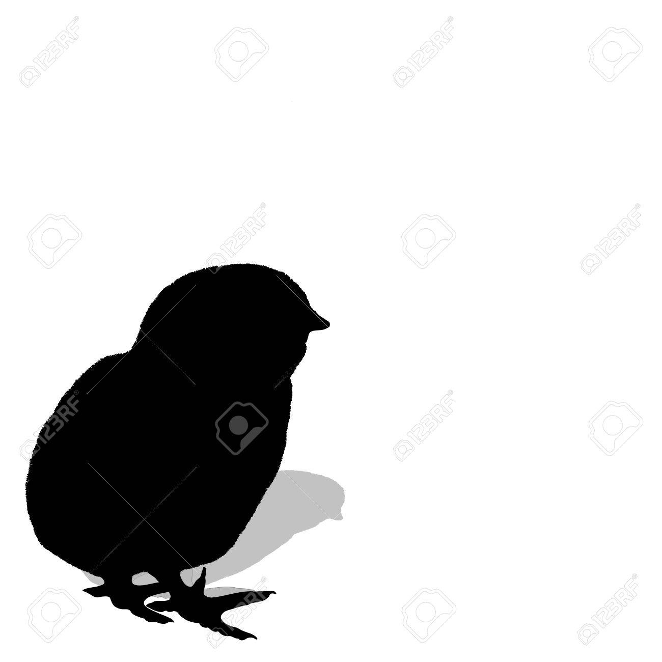 Chicken hatching.chicken's silhouette on white background. vector Stock Vector - 5264867