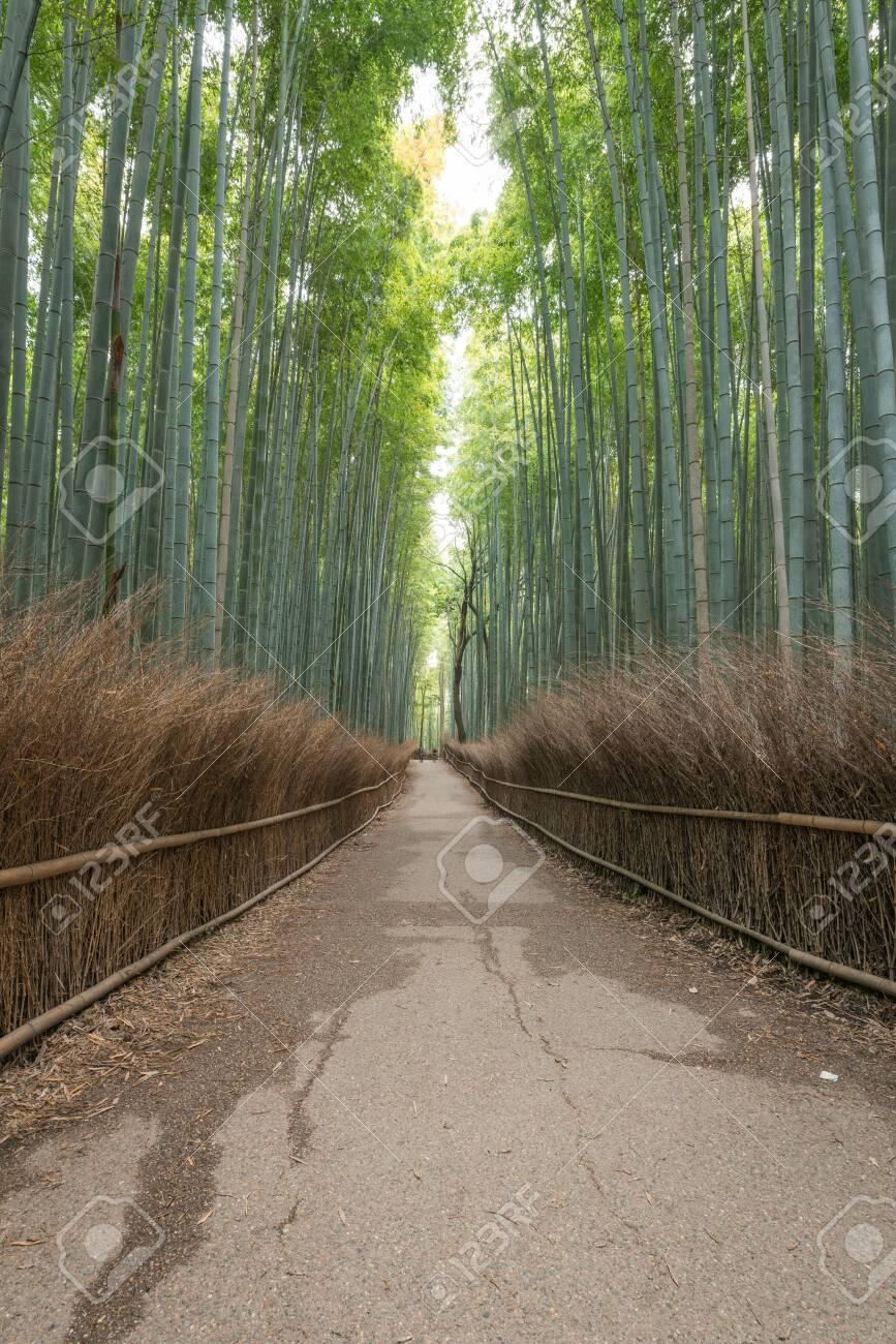 Arashiyama Bamboo Forest in summer morning, Kyoto, Japan - 141096860