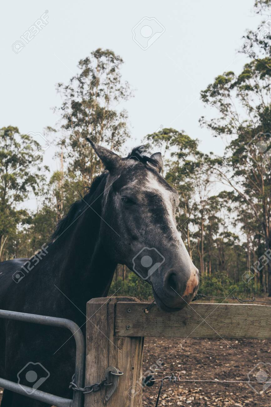 Beautiful Black Horse With White Stain On The Forehead On Wild Stock Photo Picture And Royalty Free Image Image 142265184