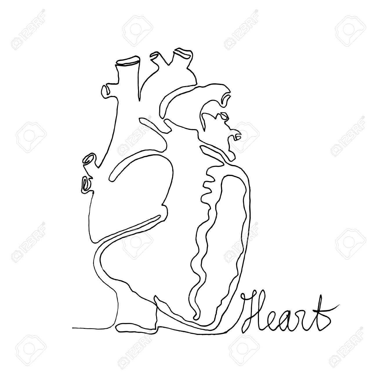 Continuous One Line Drawing. Anatomy Humans Heart. Minimalism ...