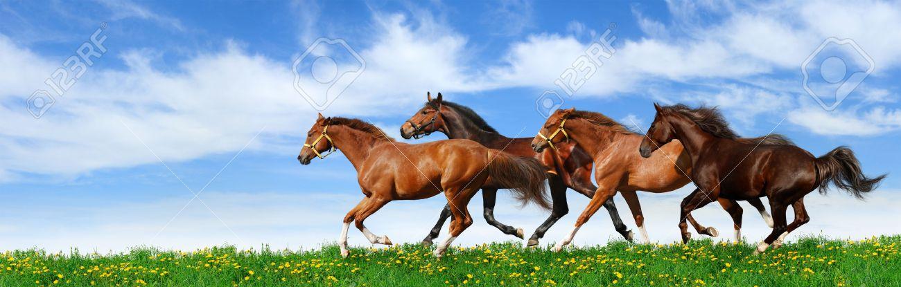 herd gallops in green field Stock Photo - 9912959