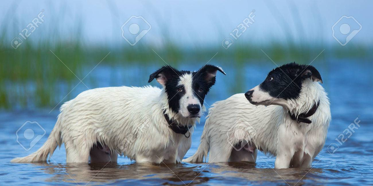 Close Up Two Puppies Of Mongrel Standing In Water On The Sea