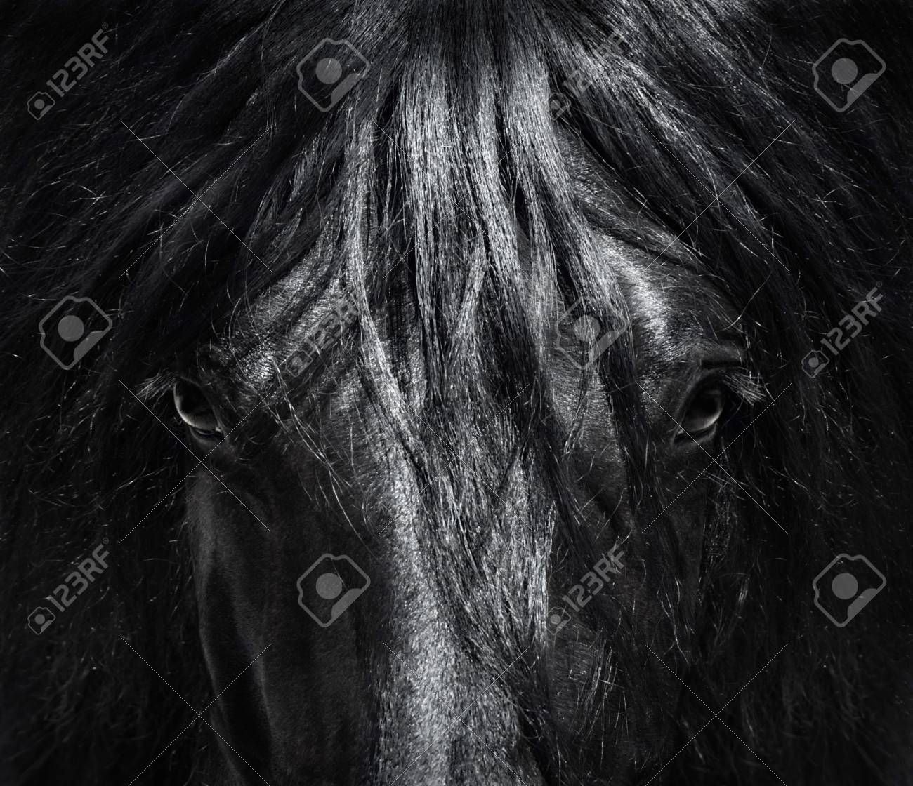 Portrait close up spanish purebred horse with long mane black and white photo