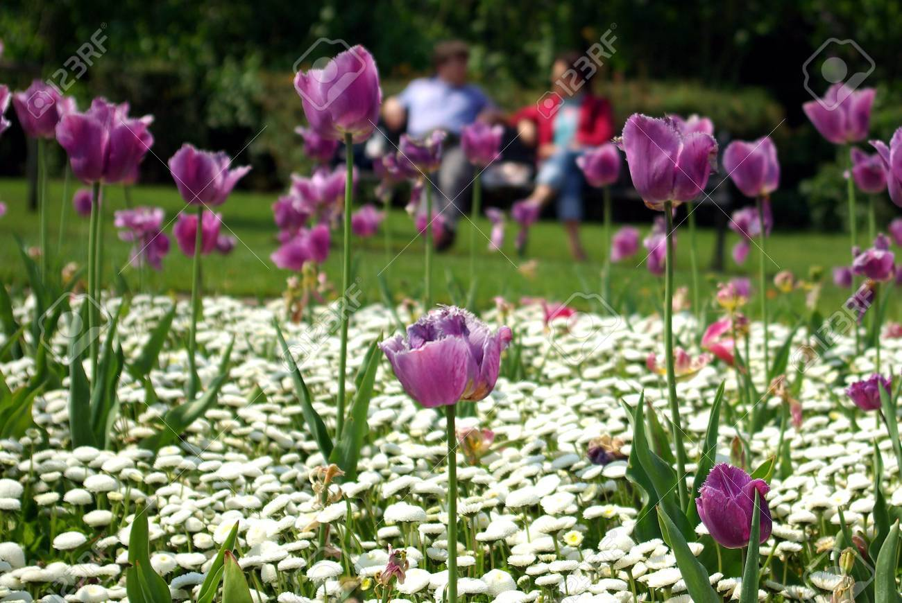 People having a chat behind flowers Stock Photo - 3161357