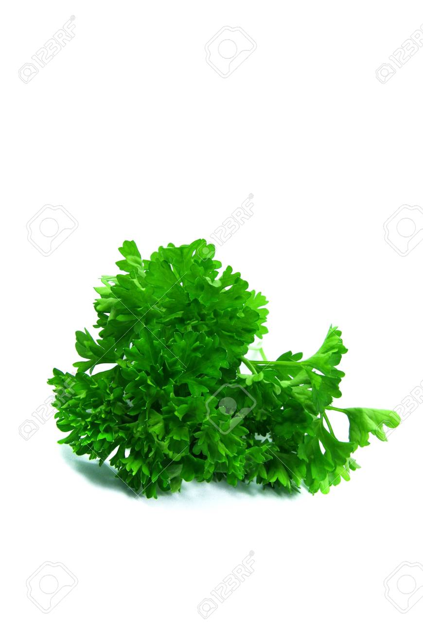 Close-up view of a bunch of parsley. Stock Photo - 3823381
