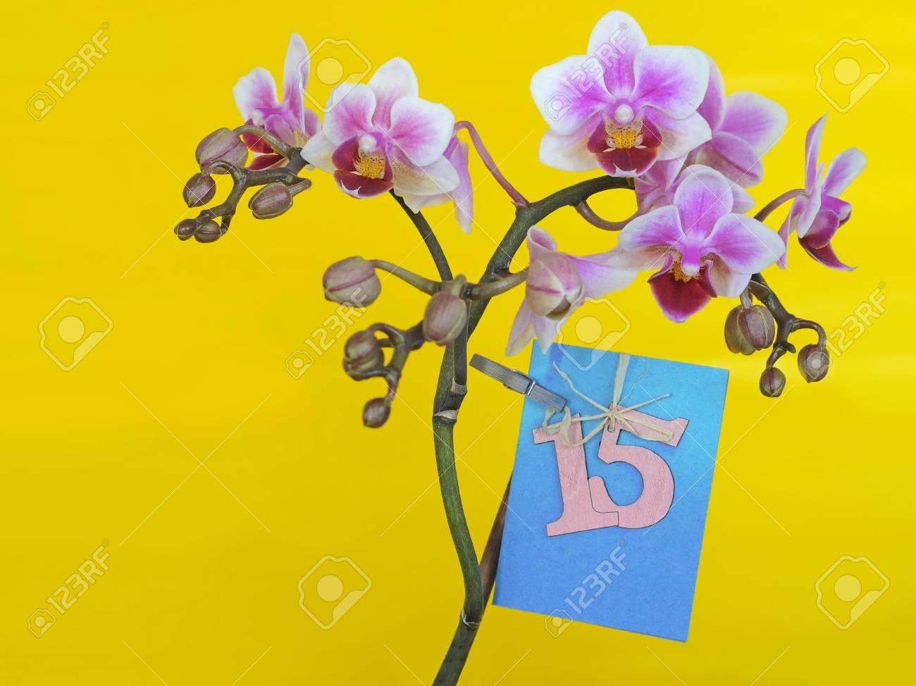 Immagini Stock Fiore Con Dedizione Scheda Di Buon Compleanno