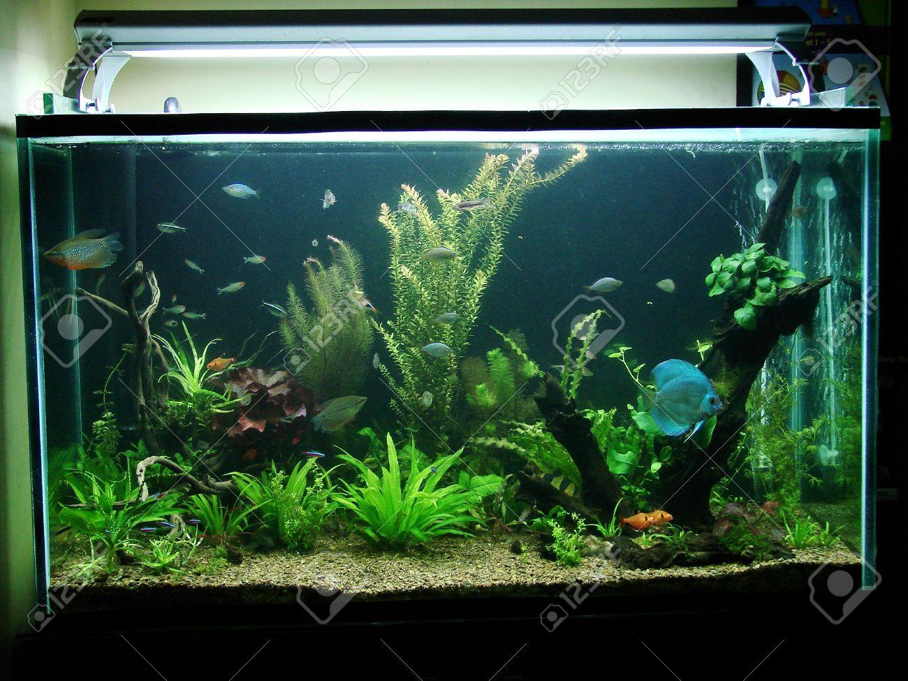 Planted Nature Aquarium Featuring An Amazon River Biotope Stock