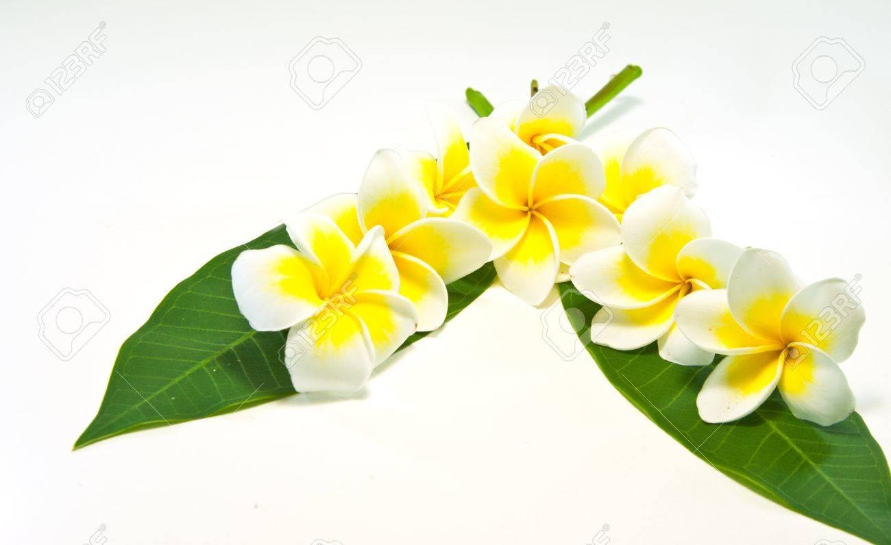 Frangipani on white background . an originate flower in asia. - 9653240