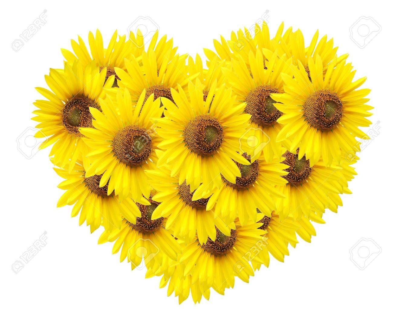 design of sunflower isolated on white. - 9842363
