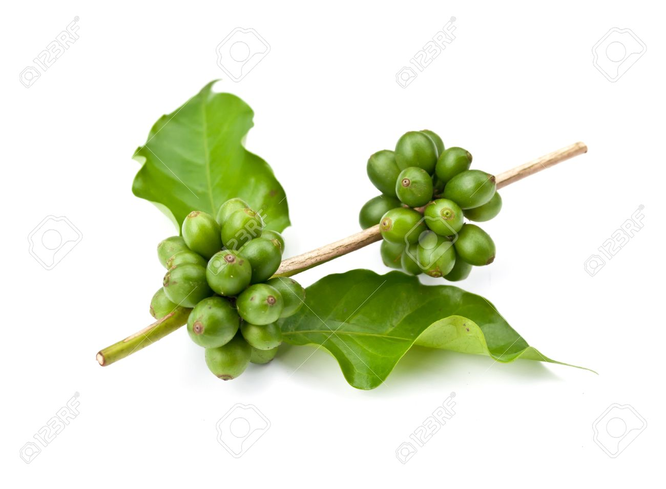 coffee beans and leaf on white background - 14395567