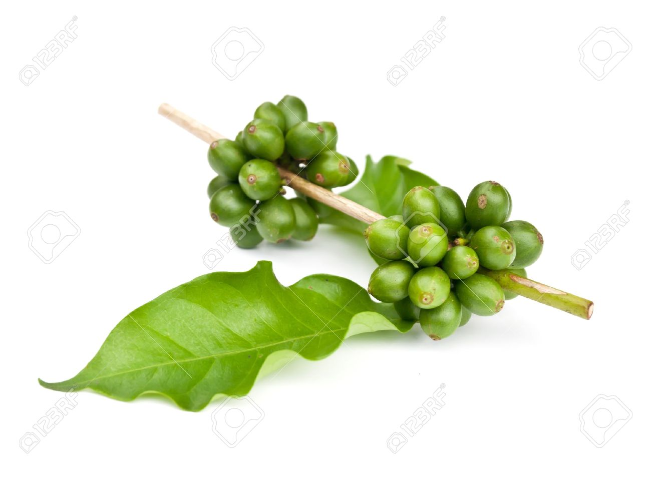 coffee beans and leaf on white background - 14395565