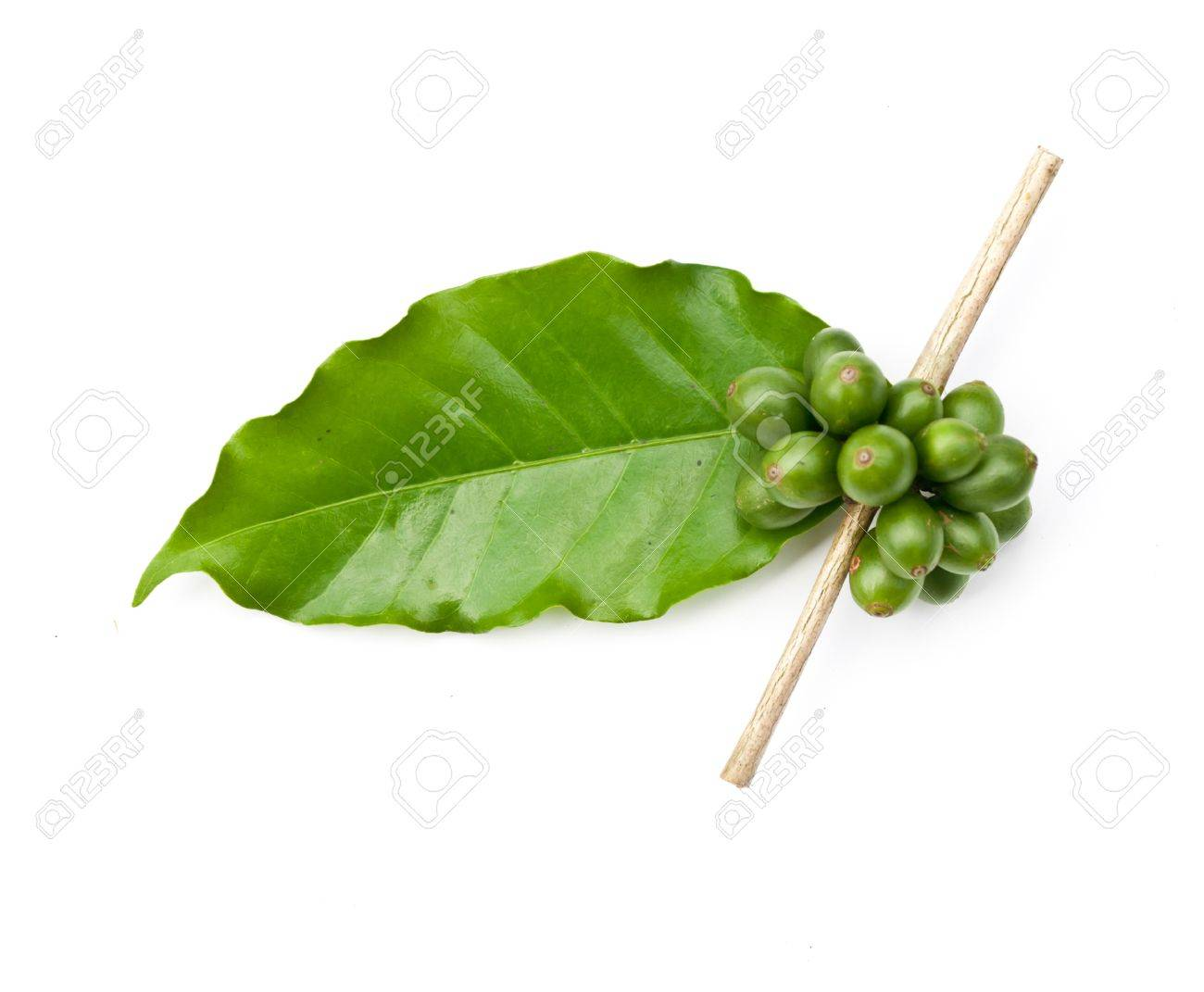coffee beans and leaf on white background - 14395566