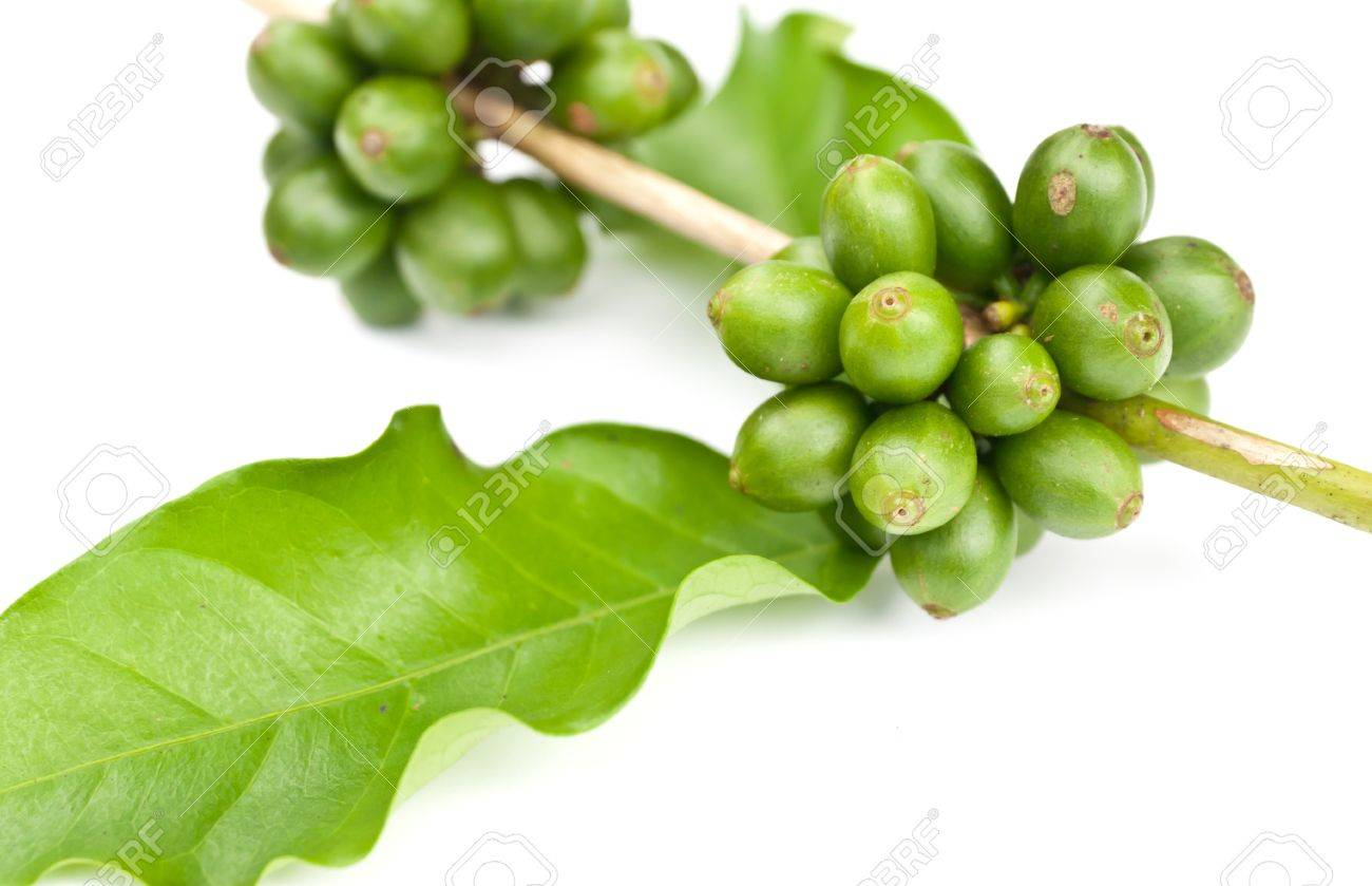 coffee beans and leaf on white background - 14395572