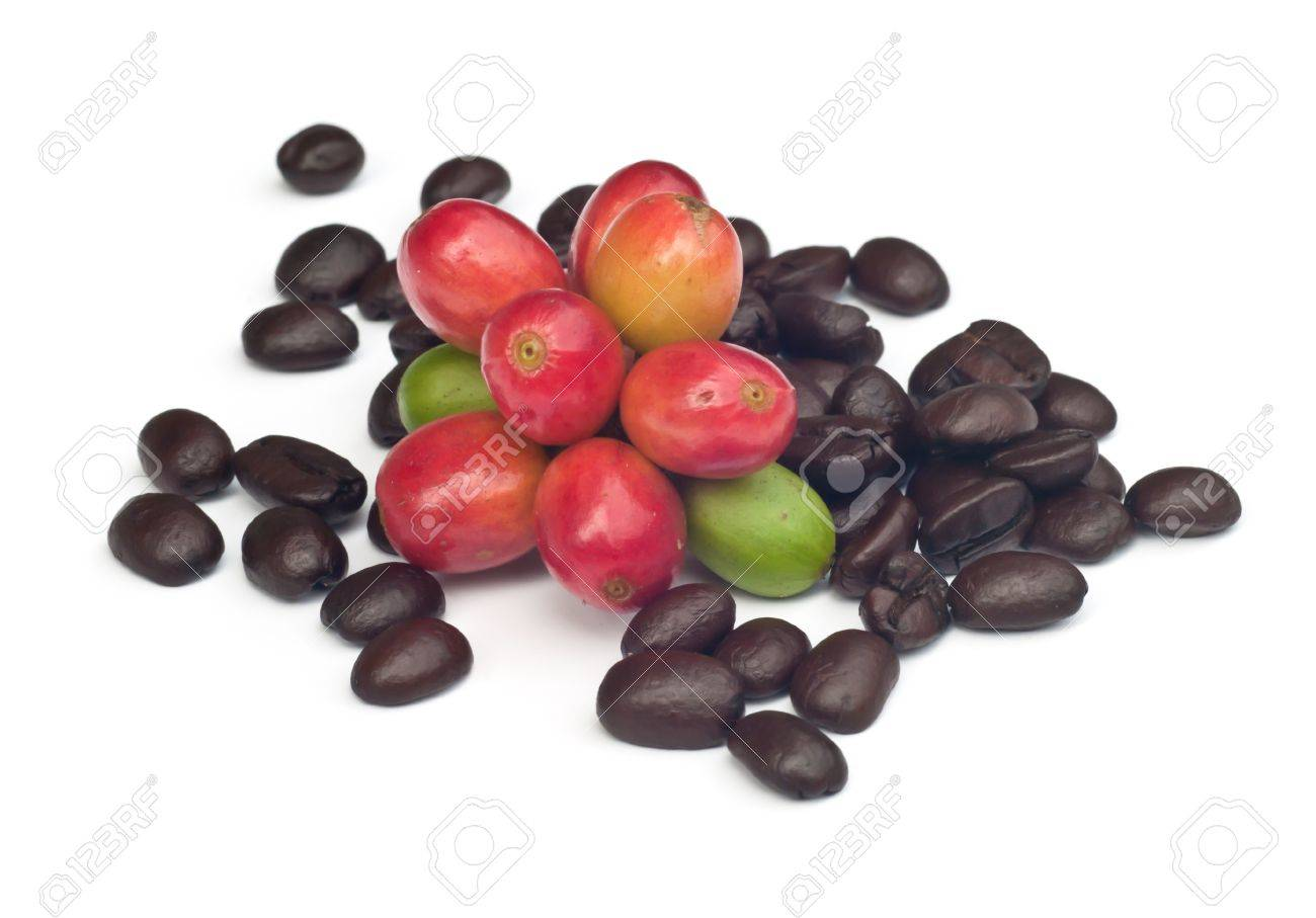 coffee beans and red  ripe coffee Isolated  on white background Stock Photo - 15363691