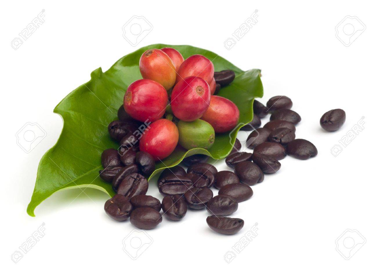coffee beans and red  ripe coffee Isolated  on white background Stock Photo - 15363694