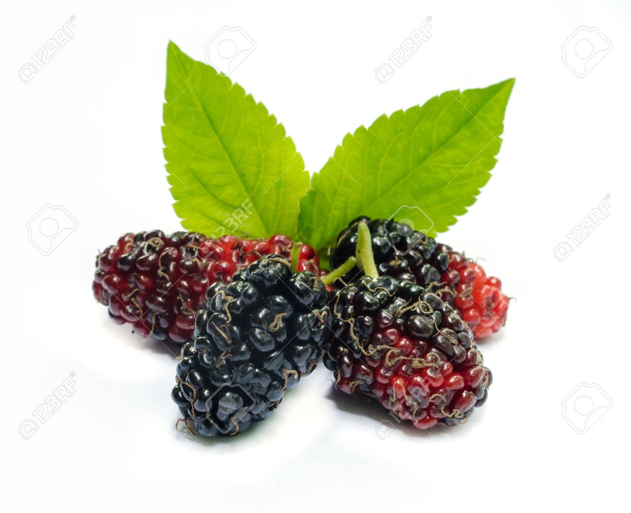 Group of mulberries with a leaves Isolated on a white background. - 23031820