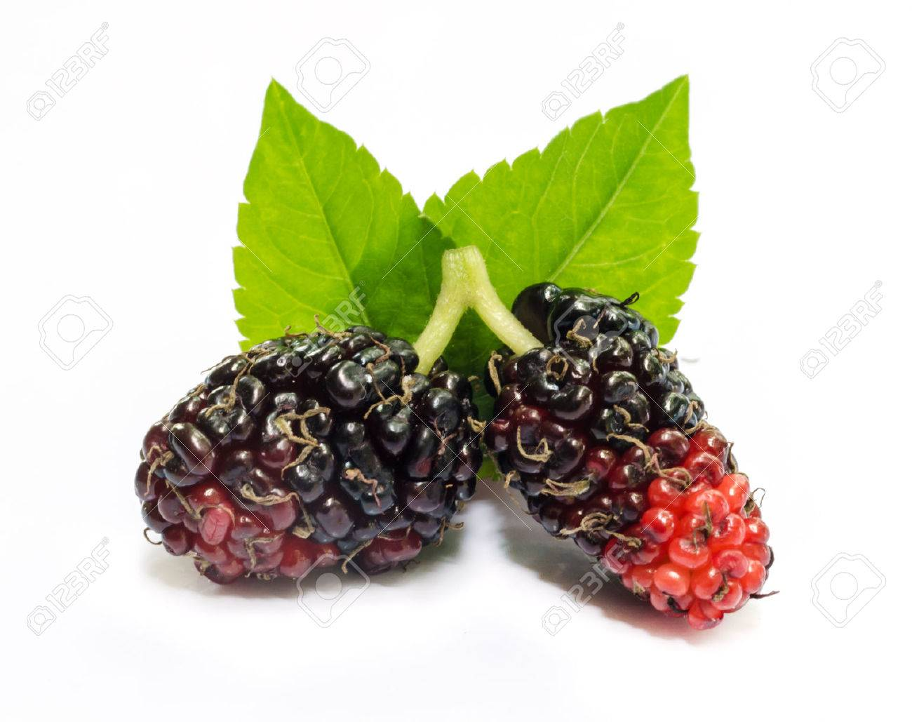 Group of mulberries with a leaves Isolated on a white background. - 23031837