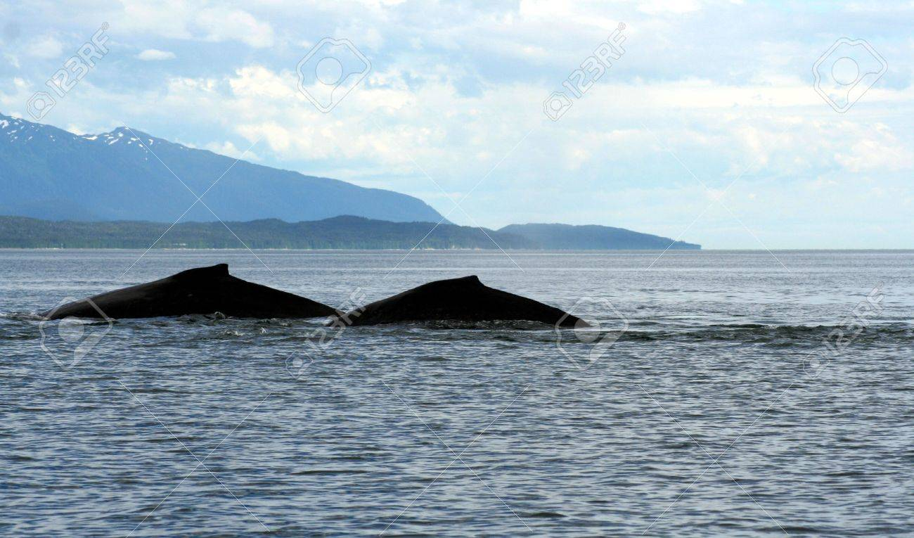 Two whales Stock Photo - 710967