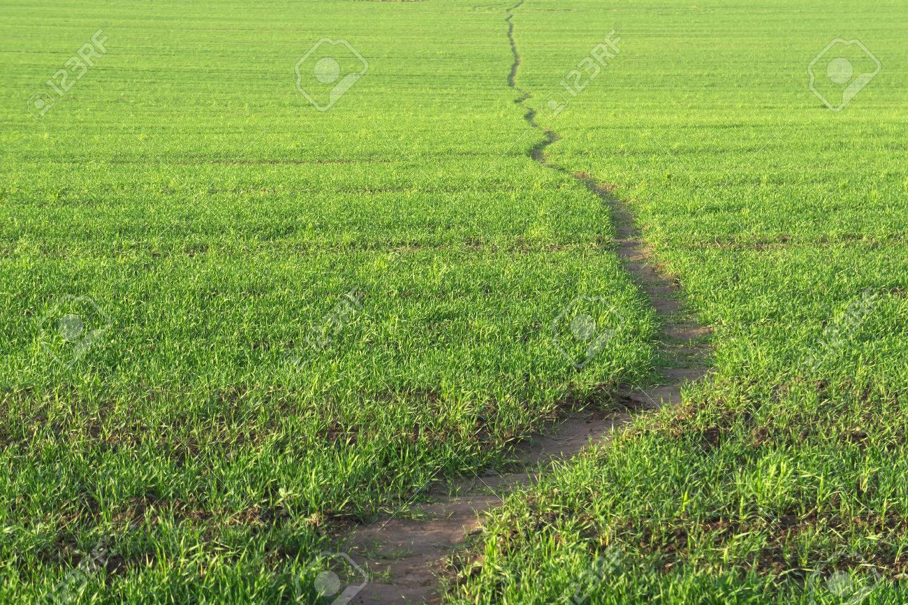 Wavy line of path walk. Green grass background. - 24237970